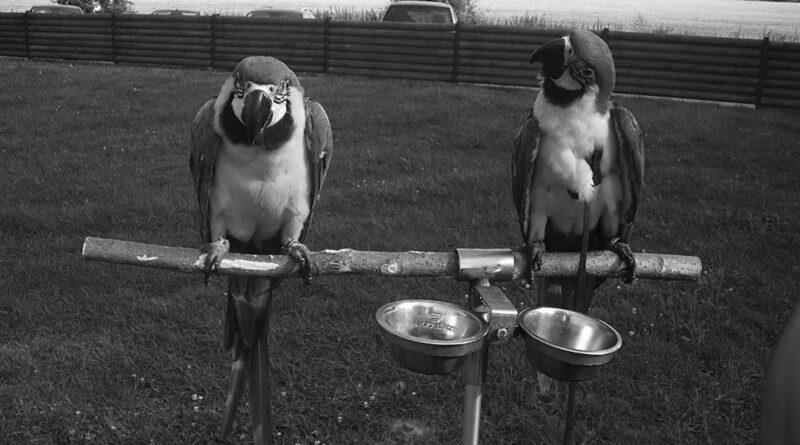 Sraz milovníků papoušků na Krásném